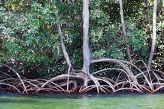 Senegalfluss Kreuzfahrten