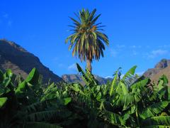 Kanarische Inseln Kreuzfahrten