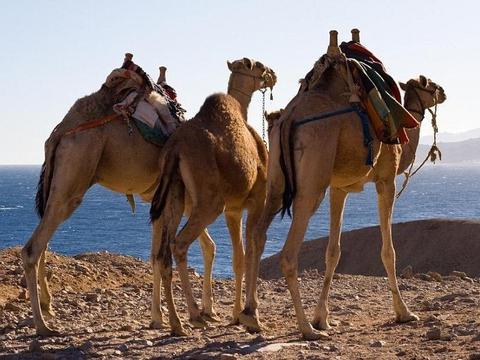 Abenteuer Suez-Kanal